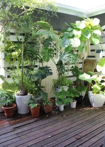 ◆デッキの植物_e0154682_21360163.jpg