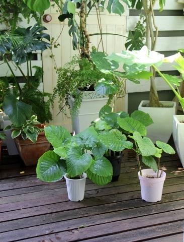 ◆デッキの植物_e0154682_21362007.jpg