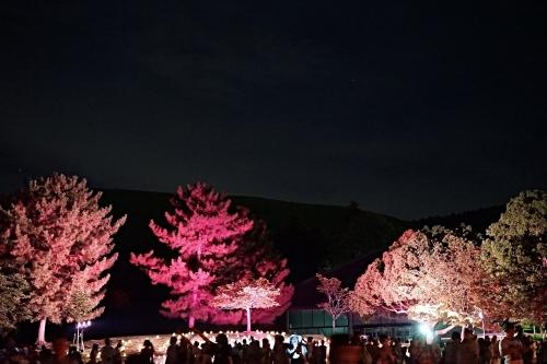** 奈良燈花会 **_c0207890_13341390.jpg