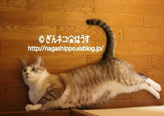 夕焼け_a0333195_08563577.jpg