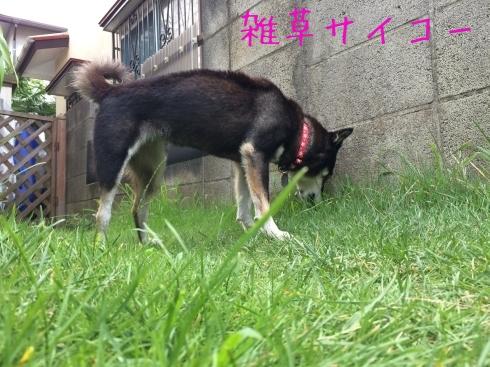 夏の片付け 赤紫蘇_f0369014_19215959.jpg