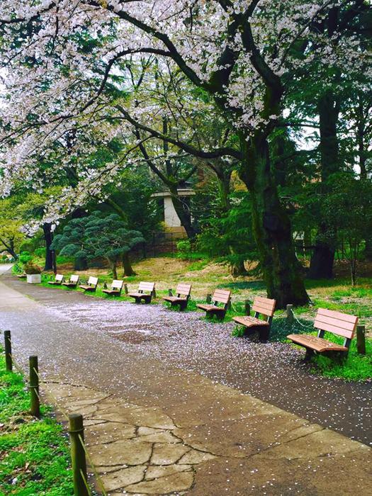 善福寺公園 / iPhone 6_c0334533_01243195.jpg