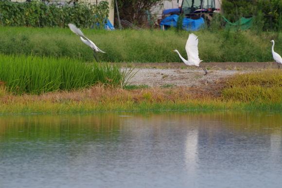 近くの田んぼでウユニ塩湖気分(爆)_d0227044_9572473.jpg
