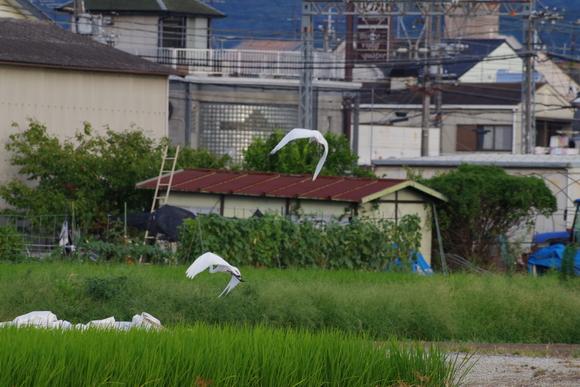 近くの田んぼでウユニ塩湖気分(爆)_d0227044_9581793.jpg