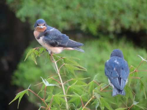 鳥たち_e0240147_833719.jpg
