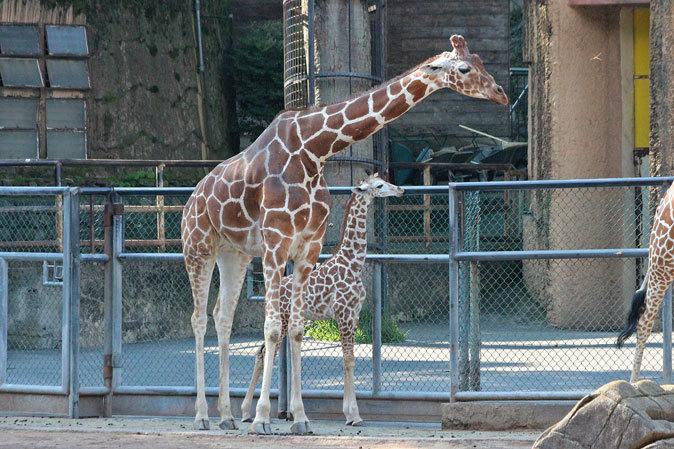 サマーナイト@Tama Zoo~大回転フブキ&夏毛たぬたぬ_b0355317_09595261.jpg