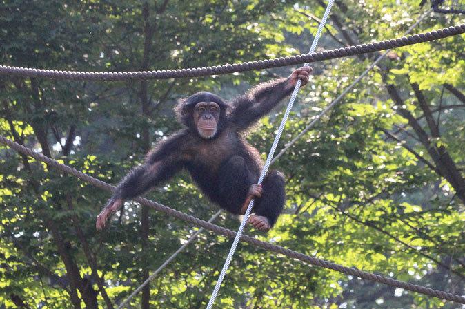 サマーナイト@Tama Zoo~大回転フブキ&夏毛たぬたぬ_b0355317_10041705.jpg