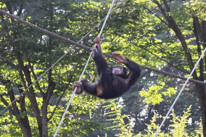 サマーナイト@Tama Zoo~大回転フブキ&夏毛たぬたぬ_b0355317_10062297.jpg