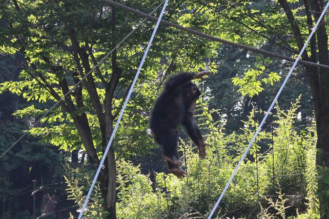 サマーナイト@Tama Zoo~大回転フブキ&夏毛たぬたぬ_b0355317_10071517.jpg