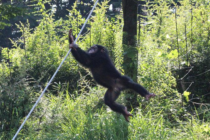 サマーナイト@Tama Zoo~大回転フブキ&夏毛たぬたぬ_b0355317_10074443.jpg