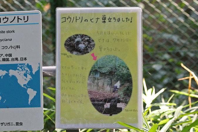 サマーナイト@Tama Zoo~大回転フブキ&夏毛たぬたぬ_b0355317_10194959.jpg