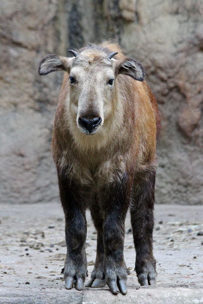 サマーナイト@Tama Zoo~大回転フブキ&夏毛たぬたぬ_b0355317_10203524.jpg