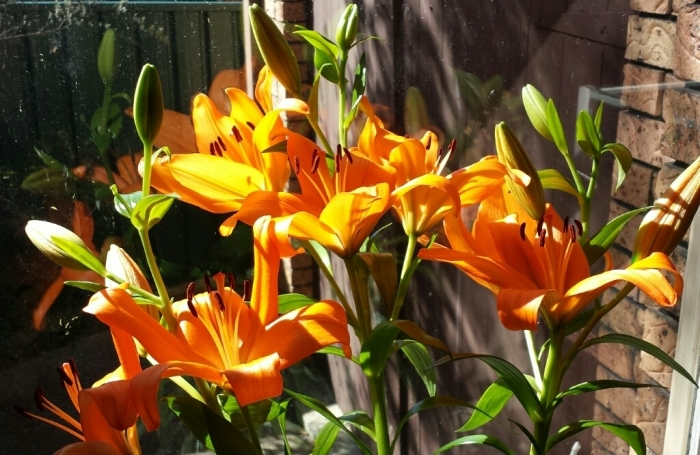 Lilly in the sun_f0155522_18085865.jpg