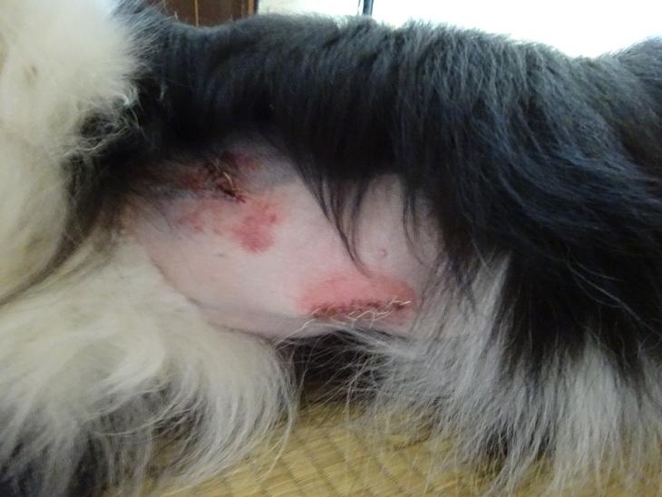 腫瘍摘出手術しました_b0177649_22594155.jpg