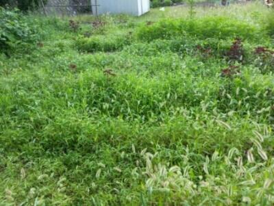 コツコツ草刈り・・・カツボの餌食に_c0330749_13042774.jpg