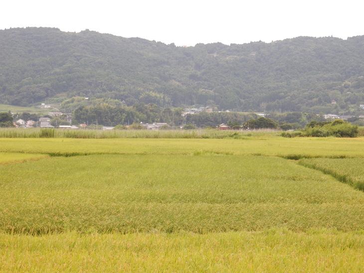 '16,8,13(土)庭仕事に芝刈り!_f0060461_12221097.jpg