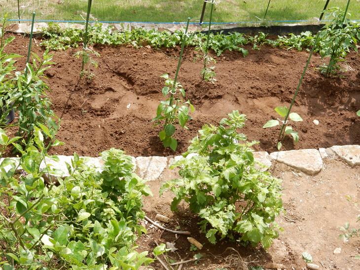 '16,8,13(土)庭仕事に芝刈り!_f0060461_1224166.jpg