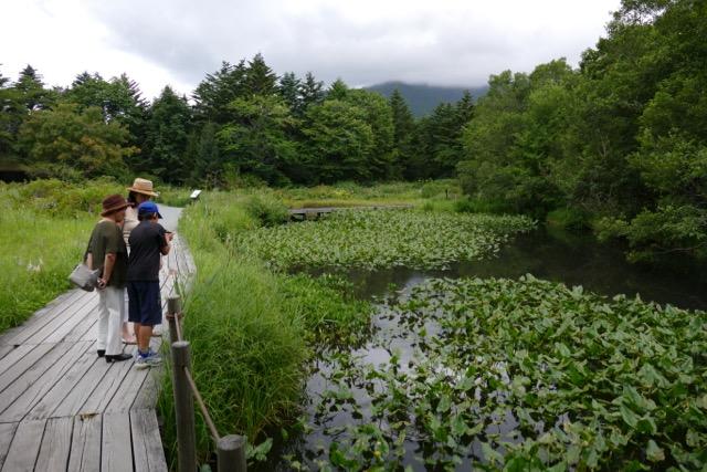 箱根湿性花園 by Meg_c0008664_23145632.jpg