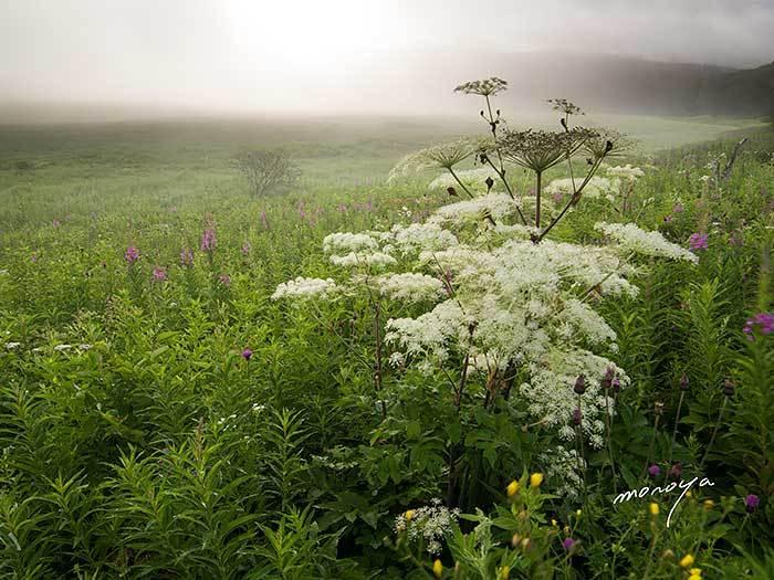 花の湿原_c0085877_06564845.jpg