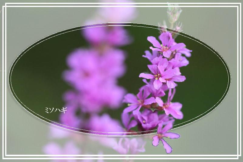 f0164592_9403376.jpg