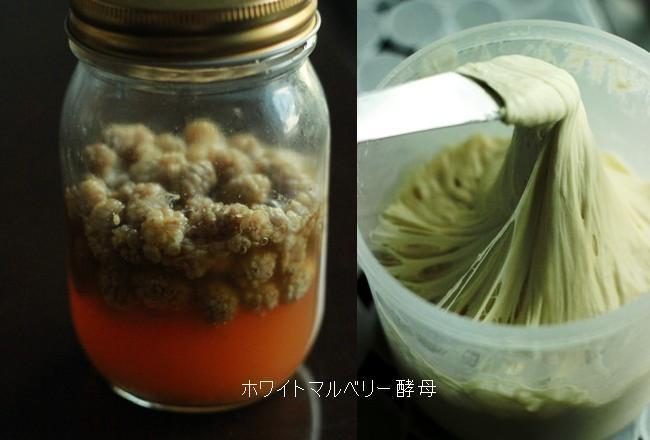 ホワイトマルベリー酵母でパンいろいろ_b0225758_23372400.jpg