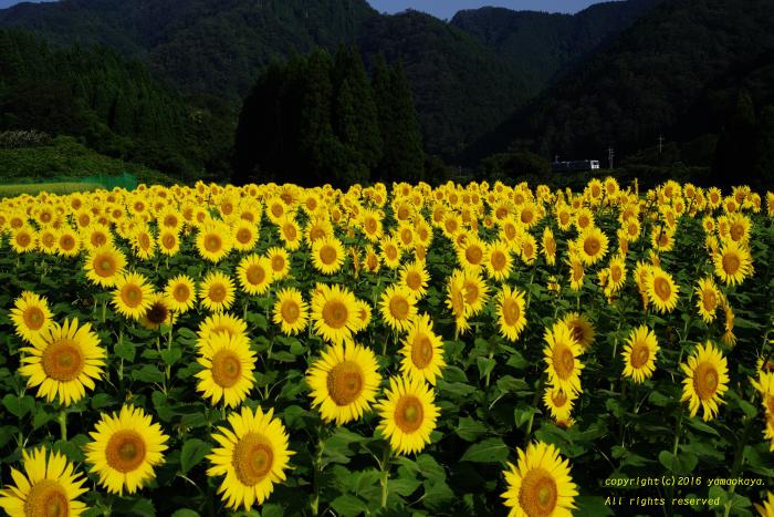 沢谷の朝に_d0309612_2346508.jpg