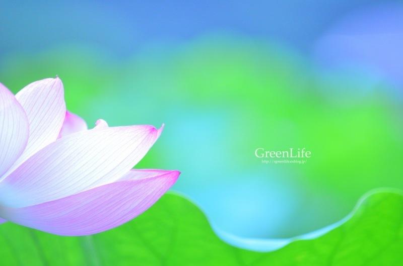 透ける花びら_f0321522_21185297.jpg