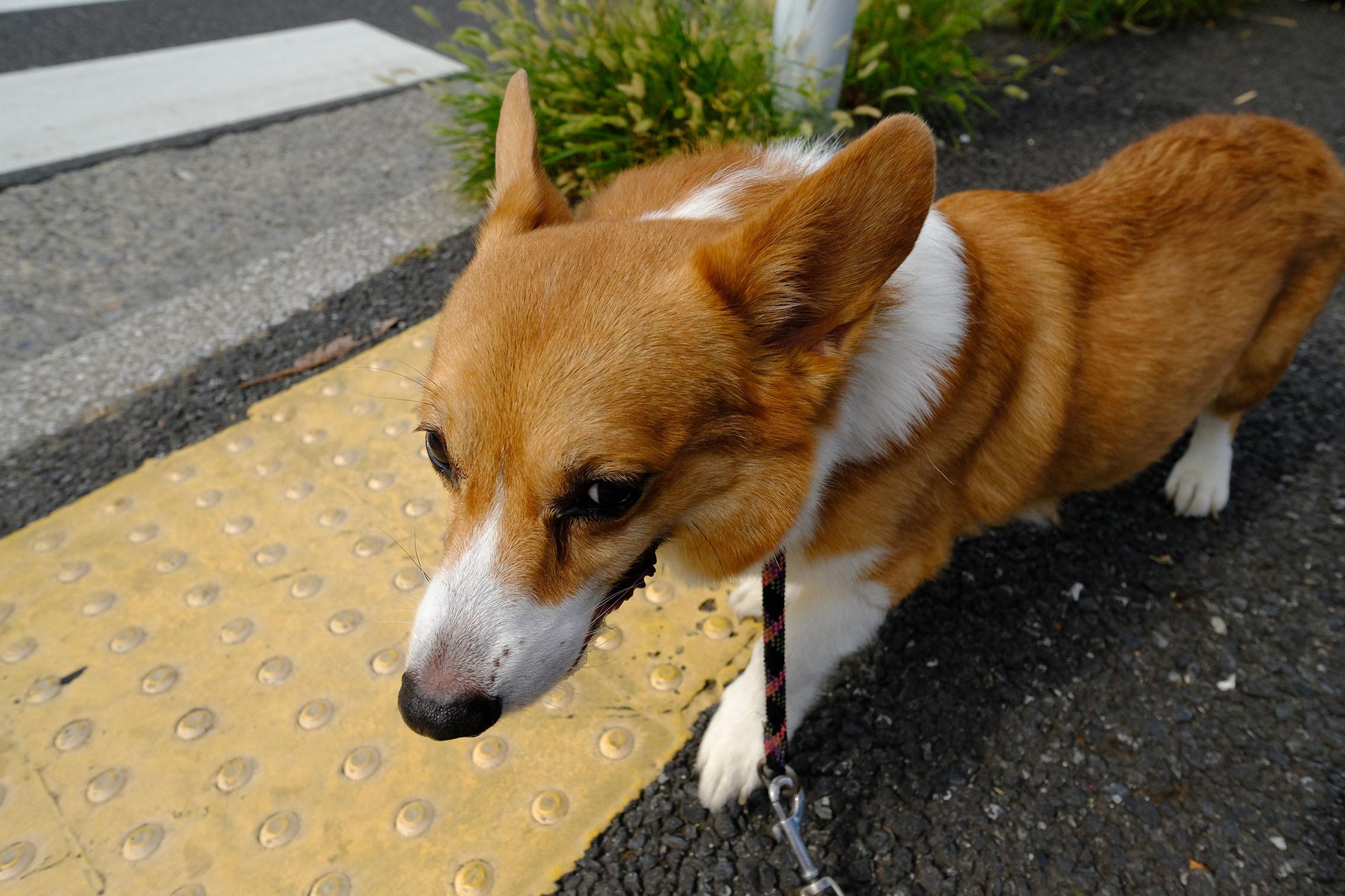富岡八幡が熱い_b0310424_20070946.jpg