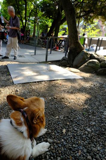 富岡八幡が熱い_b0310424_20071274.jpg