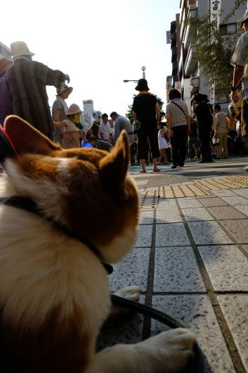 富岡八幡が熱い_b0310424_20075669.jpg