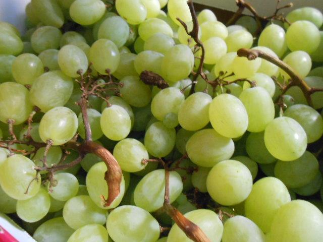 ブドウの収穫_b0305039_5333666.jpg