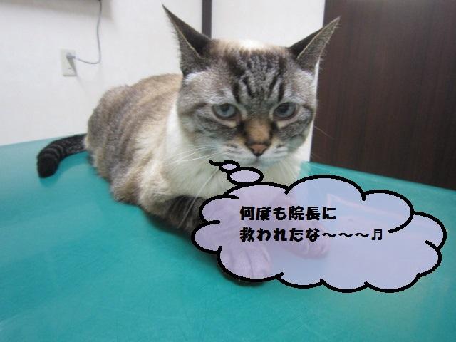 【17歳のネコ 糖尿病】_b0059154_13373970.jpg