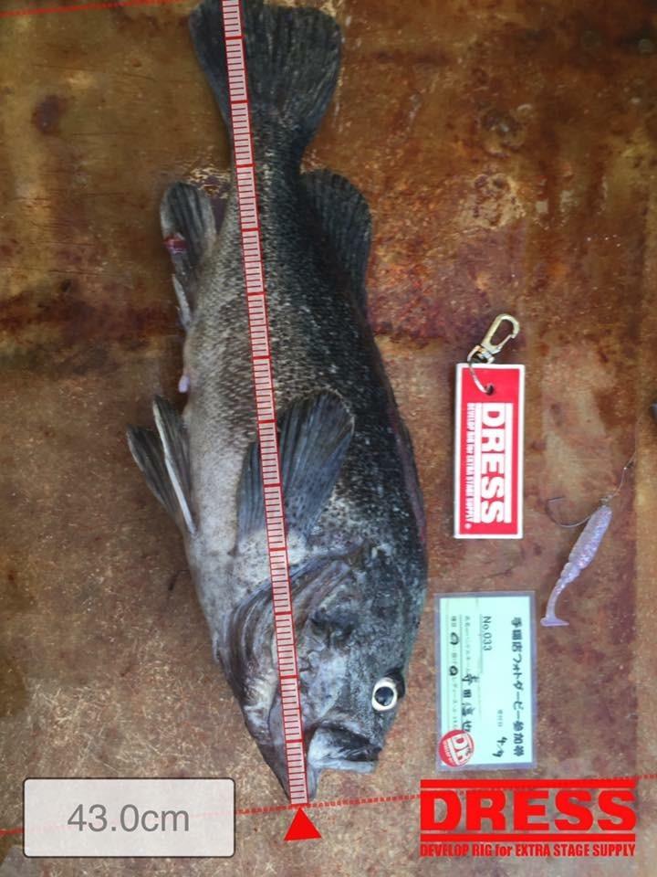 北海道の寺田信也さんからの釣果報告です。_a0097491_17554838.jpeg