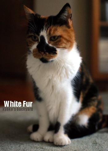 Whitneyの白い毛_b0253205_04233224.jpg