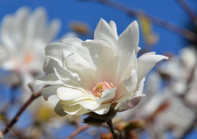 Sunny Garden_f0155522_18021709.jpg