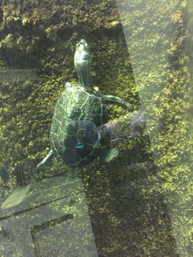 またまた忍野の水族館。_b0135325_14462955.jpg
