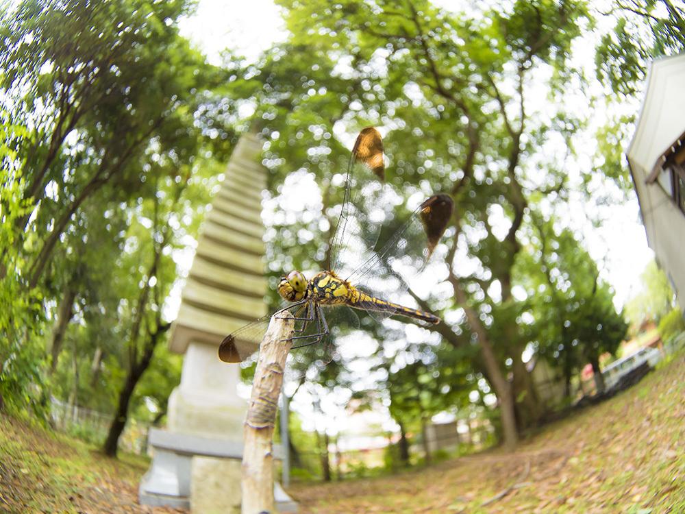 台風7号接近中 午前中のみご近所散策_f0324026_16011843.jpg