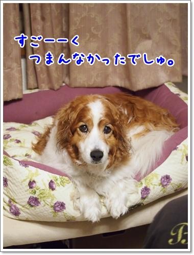 d0013149_01035663.jpg