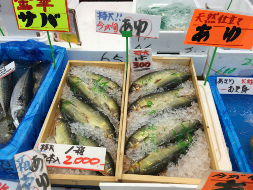 千葉の海&魚市場_c0151965_11532609.jpg