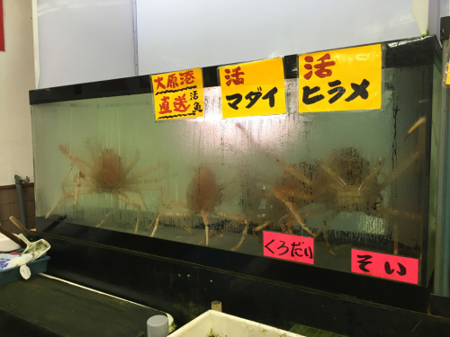 千葉の海&魚市場_c0151965_11532692.jpg