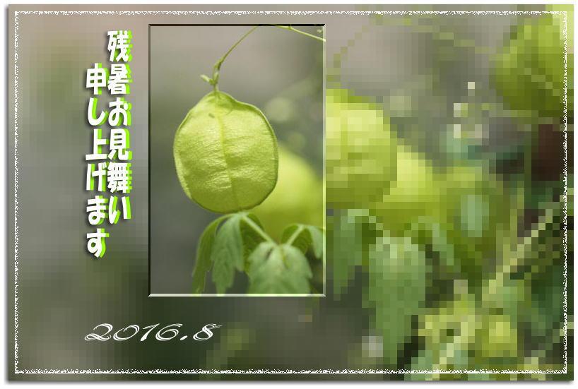 f0164592_20222282.jpg