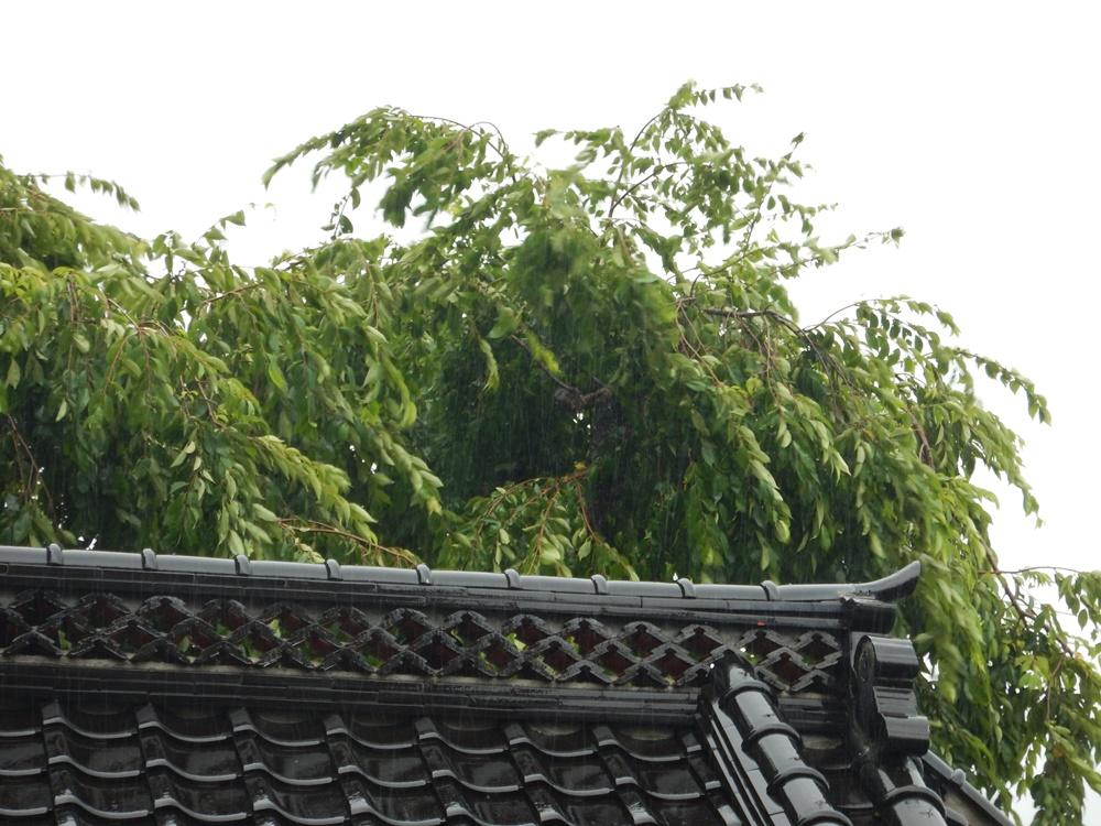 台風7号接近_c0111229_1944755.jpg