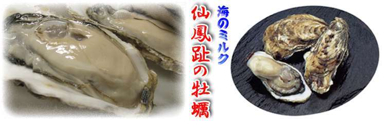北海道の豊かな森と、冷たい荒い海が育てた幻の牡蠣【極上・仙鳳趾の牡蠣】_c0355287_18065867.jpg