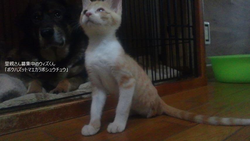 子猫たちの募集がなかなか・・・_f0242002_20321803.jpg