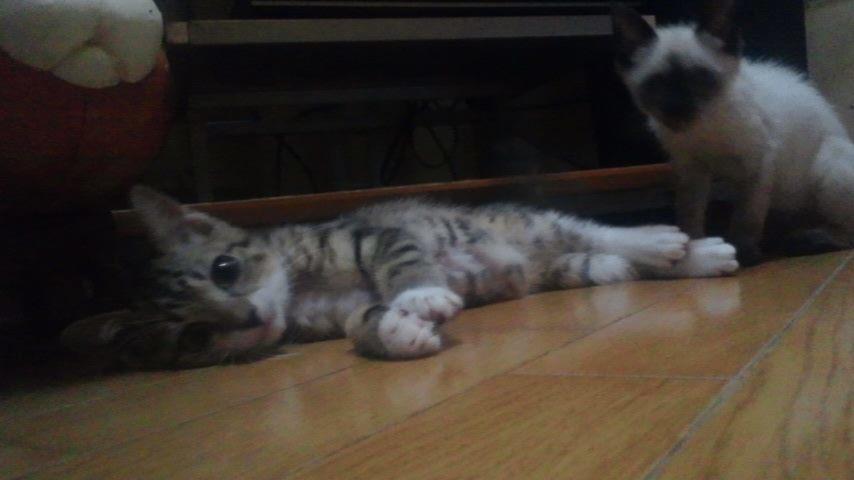 子猫たちの募集がなかなか・・・_f0242002_20372754.jpg