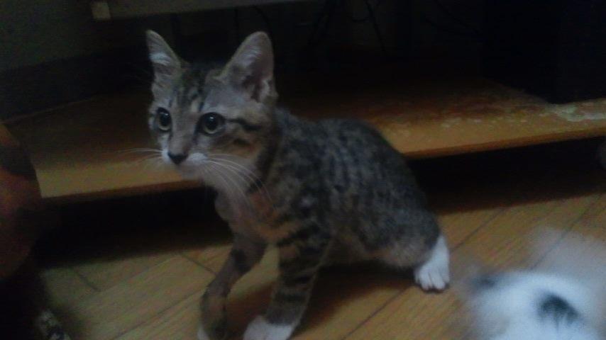 子猫たちの募集がなかなか・・・_f0242002_20375965.jpg