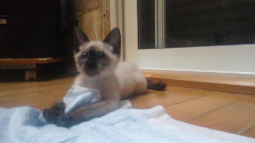 子猫たちの募集がなかなか・・・_f0242002_20423240.jpg