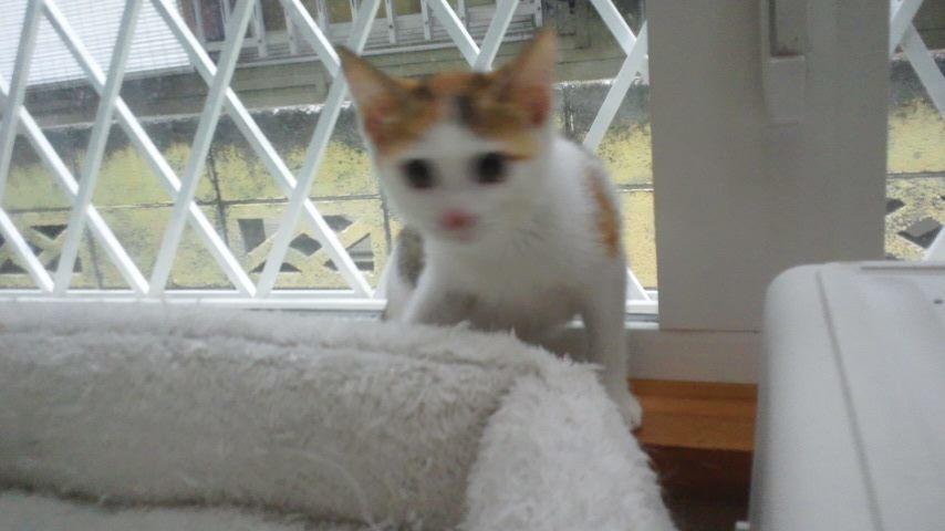 子猫たちの募集がなかなか・・・_f0242002_20432839.jpg