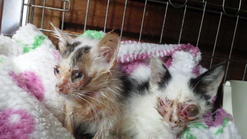子猫たちの募集がなかなか・・・_f0242002_20442539.jpg