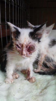 子猫たちの募集がなかなか・・・_f0242002_20444615.jpg